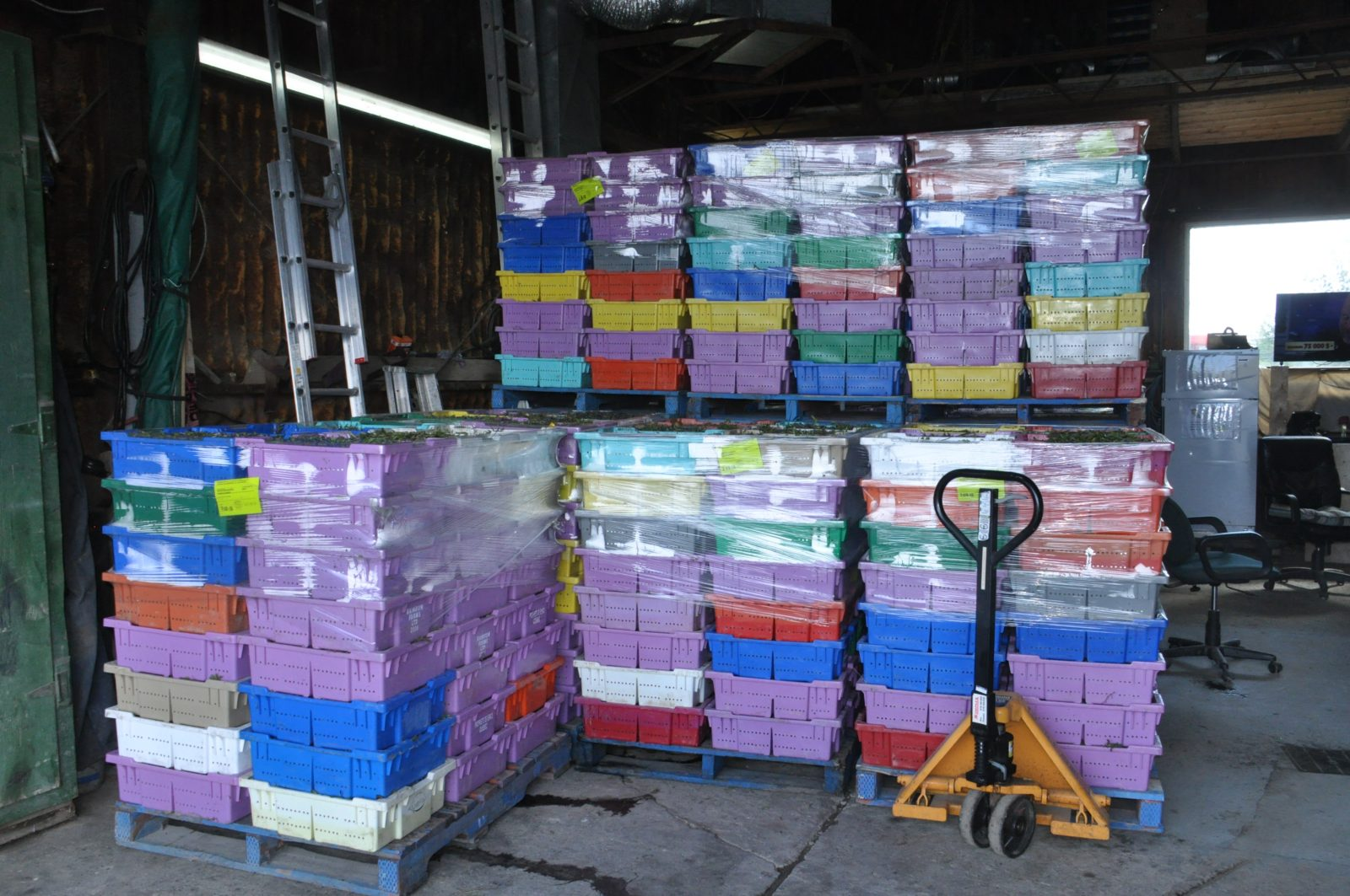 Régis Bergeron envisage acheter plus de 700000 livres de bleuets