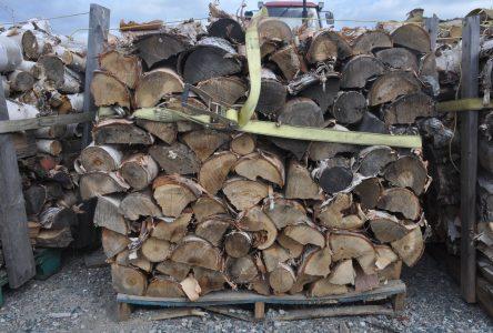 Vous devez posséder un permis pour récolter du bois de chauffage