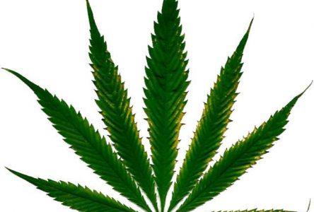 Cannabis : Chibougamau se positionnera d'ici les prochaines semaines