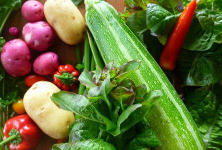 Jardiner à Chibougamau