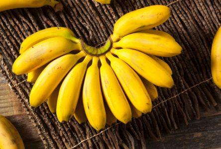 Est-ce que les bananes augmentent la sécrétion de mucus dans la gorge?