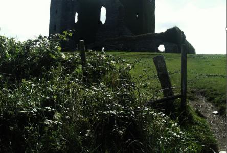 Chou dans la campagne irlandaise