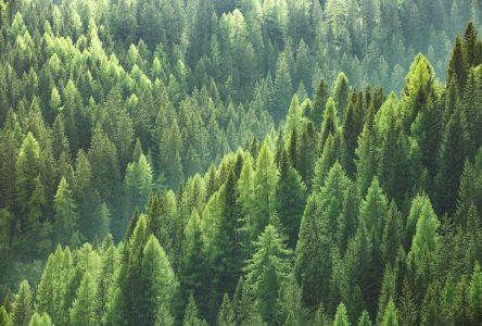 Stratégie nationale de production du bois : les avis sont partagés